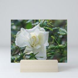 White rose Mini Art Print