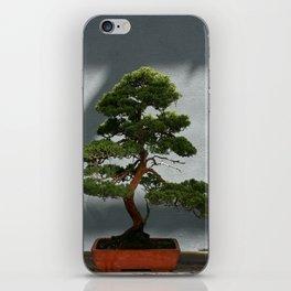 Trees #5 iPhone Skin