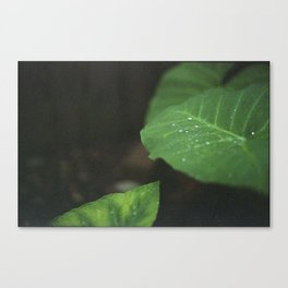 Only happy when it rains Canvas Print