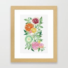 Citrus Fruit Framed Art Print