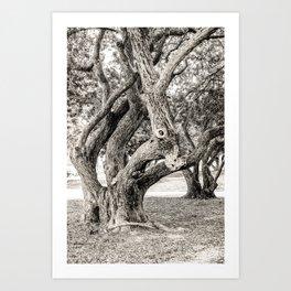 Arboreal Animal Art Print