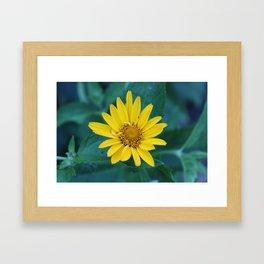 Wallflower Framed Art Print
