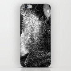 daphne iPhone & iPod Skin