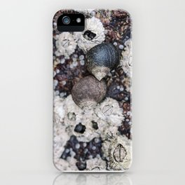 Periwinkles and Barnacles on a rock iPhone Case