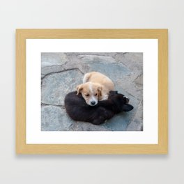 Cute white and black puppies Framed Art Print