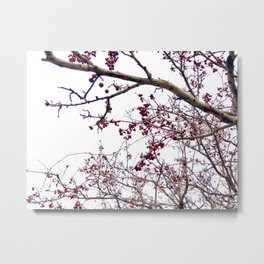A glimpse into the sky through cherry blossoms Metal Print