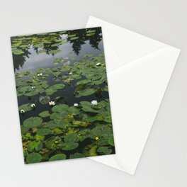 Flower. White Water-lily (Nymphaea alba) growing on a lake. Norfolk, UK.  Stationery Cards