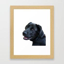 Smiling Black Labrador Retriever Framed Art Print