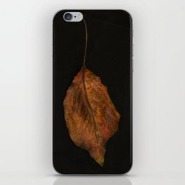 The Beauty of a Leaf iPhone Skin
