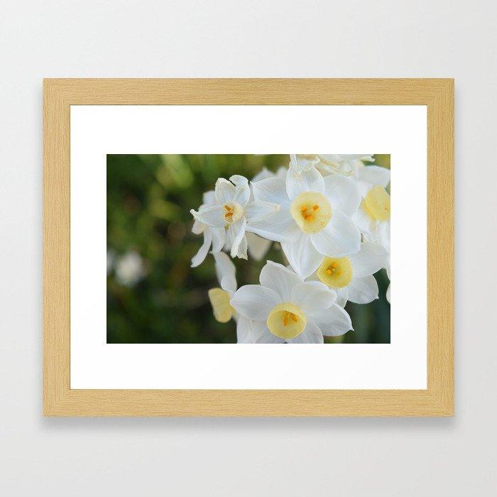 Daffodil Dream  Framed Art Print