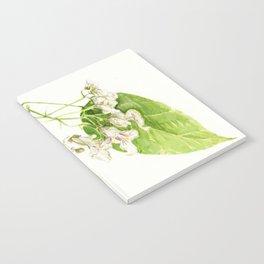 Catalpa Blossom 2017 Notebook