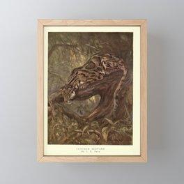 Finn - The Wild Beasts of the World (1909) - Vol 1 Plate 20 Clouded Leopard Framed Mini Art Print