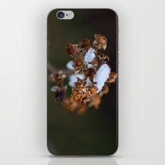 Snow Bound iPhone & iPod Skin