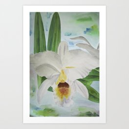 White orchid Cattleya Gaskelliana Art Print
