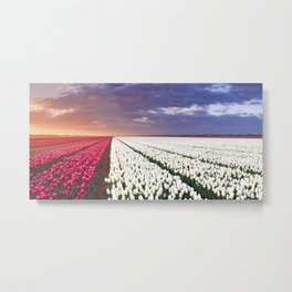 II - Rows of colourful tulips at sunrise in The Netherlands Metal Print