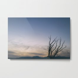 tree at dusk Metal Print