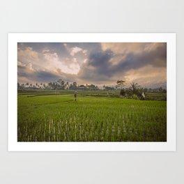 Bali rice field Art Print