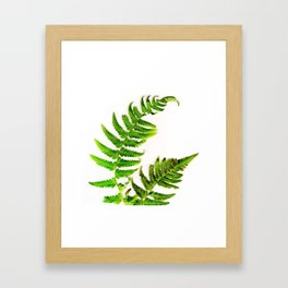 Fern on white Framed Art Print