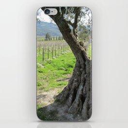 Olive tree in vineyard iPhone Skin