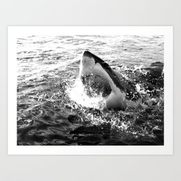 Great white shark, Carcharodon carcharias, in black and white Art Print