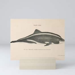 W Sidney Berridge - A Book of Whales (1900) - Figure 30: Heavyside's Dolphin Mini Art Print