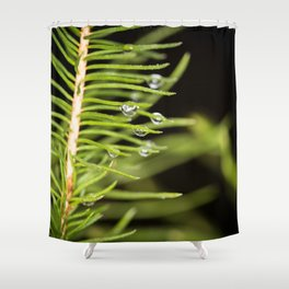 Spruce branch with drops Shower Curtain