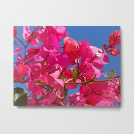 Bougainville in pink Metal Print