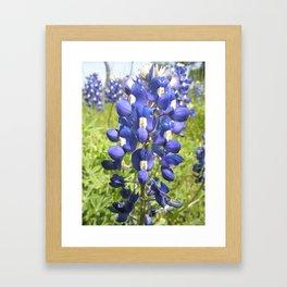 Texas Bluebonnet Framed Art Print
