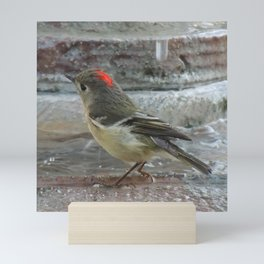 Ruby-Crowned Kinglet At The Fountain Mini Art Print