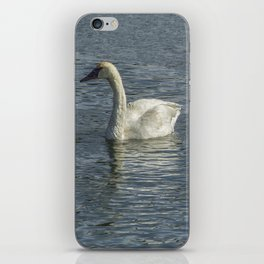 Two Trumpeter Swans at Oxbow Bend iPhone Skin