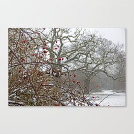 Winter berries and snow Canvas Print