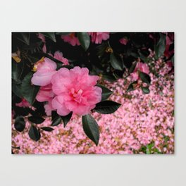 A sea of petals Canvas Print