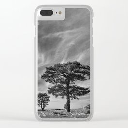 Black Pine At 2000 Meters. Cazorla Natural Park. Clear iPhone Case