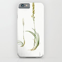 Scilla Lilio hyacinthus  from Les liliacees (1805) by Pierre Joseph Redoute (1759-1840) iPhone Case
