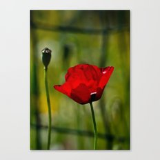 Poppy and Fence Canvas Print