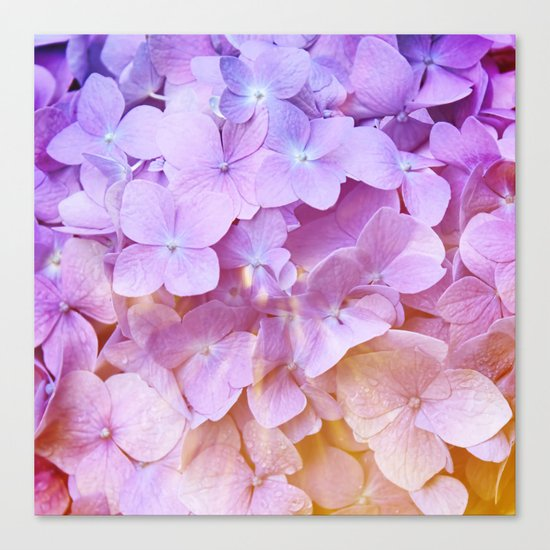 Multicolor beautiful Hydrangea petals - Flowers - Buds - Blossoms Canvas Print