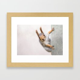 Squirrel - Who are you? Framed Art Print