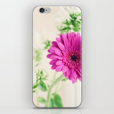 Gerberas and Phlox iPhone & iPod Skin