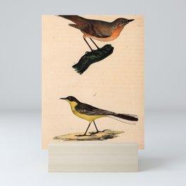 Eastern Orphean Warbler Sardinian Warbler1 Mini Art Print