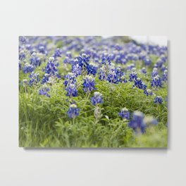 Field of Bluebonnets Metal Print