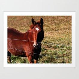 Pretty Horse Art Print
