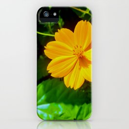 Large-flower Tickseed iPhone Case