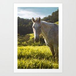 Horse Art Print