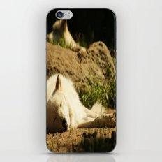 Sleeping white wolf in the summer sun iPhone & iPod Skin