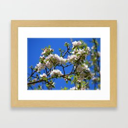 Apple Blossom Branch Framed Art Print