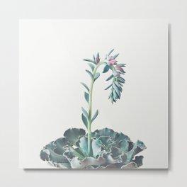 Flowering Succulent II Metal Print