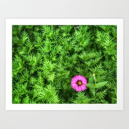 Top view of Yellow cosmos or Sulfur cosmos bush with a blooming pink Zinnia flower. Art Print