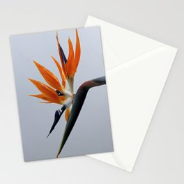 The bird of paradise flower Stationery Cards
