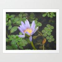 Lily of the Lake Art Print