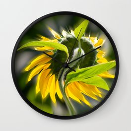 The sunflower from behind Wall Clock